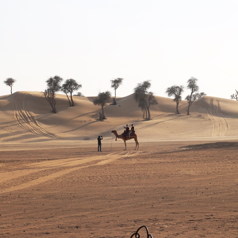 Places to visit in Dubai - Desert Safari