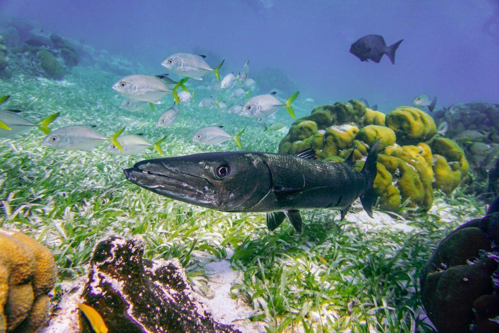 Diving Caye Caulker Belize