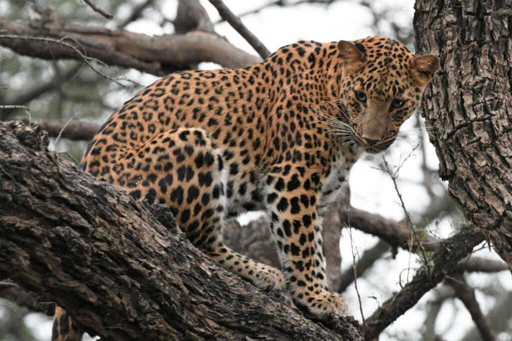 Jhalana Safari Park, Jaipur, India